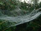 ... an Spinnennetzen, ...