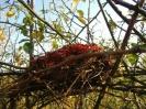 Vogelrestaurant - Nest mit Hagebuttenresten