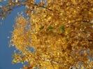 Gelb, Orange und Goldbraun