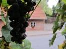 Weintrauben am Museum